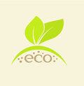 Eco emblem concept of with green leaves vector illustration Stock Photos