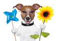 Eco energy dog green with windmill and sunflower Stock Photography