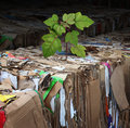 Eco friendly tree and renewable resources concept as recycling stacks of compressed corrugated coard board and paper with a new Stock Photo
