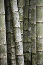 Eco friendly tropical bamboo trees full frame vertical background sustainable of thicket of weathered Stock Images