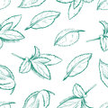 Eco peppermint tea, fresh mint leaves, menthol seamless vector background