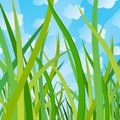 Ecological background with a grass Stock Photography