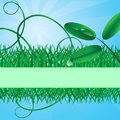 Ecological banner with a grass Stock Photography