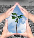 Ecological concept female hands and seedling tree with black and white city outside and blue sky inside Royalty Free Stock Photos