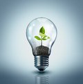Ecological idea plant in lamp Royalty Free Stock Image
