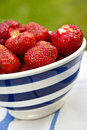 Ecological strawberries in a bowl Royalty Free Stock Images