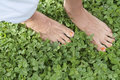 Ecology concept bare foot on clover meadow Royalty Free Stock Photos