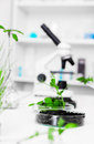 Ecology laboratory genetically modified plant tested in petri dish Royalty Free Stock Image
