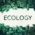Ecology text with green leaf.friendly,eco environment,concept