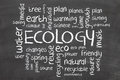Ecology word cloud Royalty Free Stock Photo