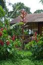 Ecuador Jungle Royalty Free Stock Photo