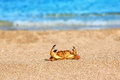 Ed crab on beach Royalty Free Stock Photo