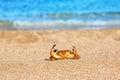 Ed crab on beach Royalty Free Stock Photo