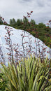 Eden Project biome in St. Austell Cornwall Royalty Free Stock Photo