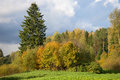 Edge of autumn forest cloudy October day. Russia Royalty Free Stock Photo