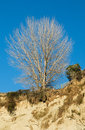 On the edge winter looking tree living of this cliff Royalty Free Stock Photography
