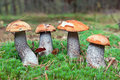 Edible mushrooms in forest Stock Photo