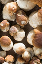 Edible mushrooms on a plate Stock Photography