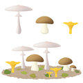 Edible mushrooms set of delicious Stock Images