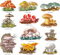 Edible mushrooms vector collection of Stock Photos
