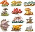 Edible mushrooms Royalty Free Stock Photo
