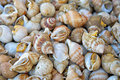 Edible sea snails on the market closeup image Royalty Free Stock Photo