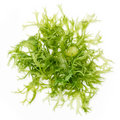 Edible seaweed salad Royalty Free Stock Photography