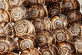 Edible snails Royalty Free Stock Image
