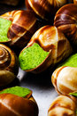 Edible snails Stock Photography