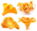 Edible wild mushroom chanterelle cantharellus cibarius isolateв on white Stock Image