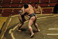 Editorial wrestlers in sumo tournament tokyo may unidentified the grand tokyo japan on january Royalty Free Stock Images
