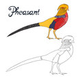 Educational game coloring book pheasant bird Royalty Free Stock Photo