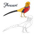 Educational game connect dots draw pheasant bird Royalty Free Stock Photo
