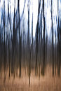 Eerie trees an abstract image of ghostly Royalty Free Stock Image