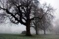 Eerie Trees of Winter in Diss Norfolk Park