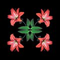 Efflorescent patchwork. Beautiful amaryllis flowers blooming on patchwork leaves Royalty Free Stock Photo