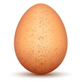 Egg. Stock Images