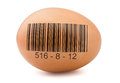 Egg with barcode Stock Photo
