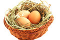 Egg in the basket Royalty Free Stock Images