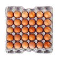 Egg in carton box Royalty Free Stock Photo