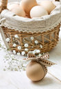 Egg chicken with ribbon basket with eggs on wooden background Royalty Free Stock Photo