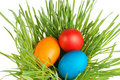 Egg easter in a grass Stock Images