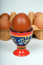 Egg in an eggcup a boiled with a carton of eggs to the rear Royalty Free Stock Photo