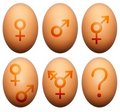 Egg gender Royalty Free Stock Photography