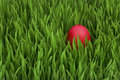 Egg in grass Stock Photography
