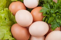 Egg with greens Royalty Free Stock Photography