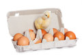 Egg package with cute baby chick Royalty Free Stock Photo
