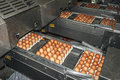 Egg packaging lines industrial in the casings Stock Photography
