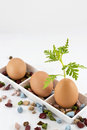 Egg and plant Royalty Free Stock Photos