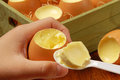 Egg Pudding Stock Image